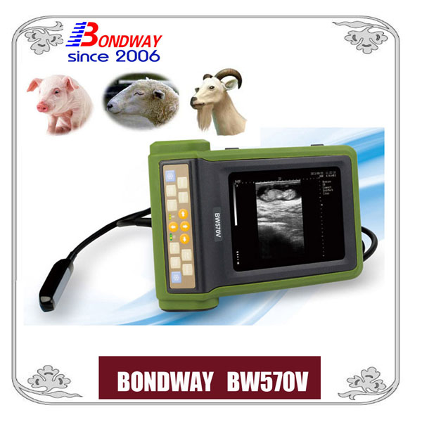 ultrasound for pig