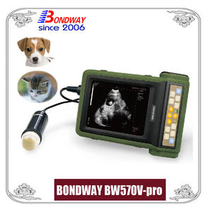 Digital Ultrasound For Companion Animal Or Small Animals