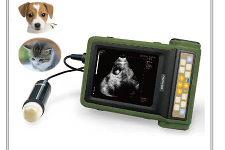 ultrasound for companion animal