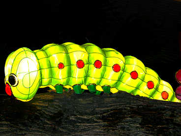 luces de china-Caterpillar