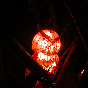 Lunar New Year Lanterns-The Owl