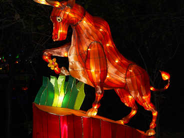 decorative lanterns- Animals-Bulls
