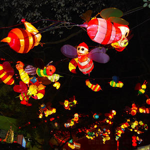lantern supplier-insect- Bee