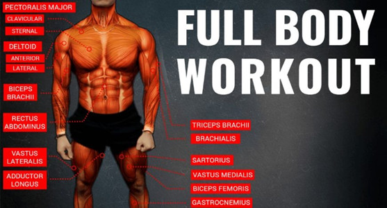 To Do Full Body Workout For Bodybuilding